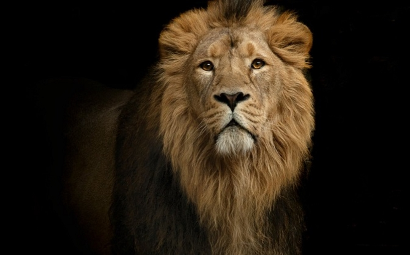 Lions Reportedly Save Pastor and His Friends from Attack by Islamic Extremists